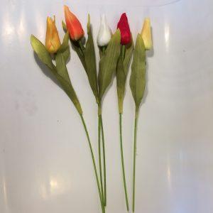 Kwiat tulipan pojedynczy