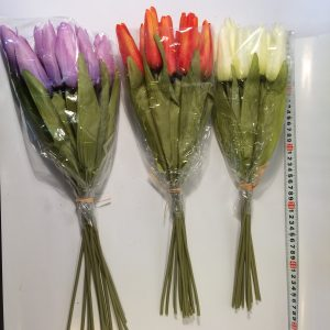 Kwiat tulipan wiązka